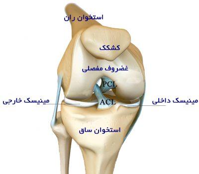 knee anatomy3